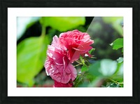 Rose Name Picture Frame print