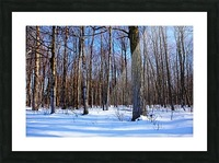 Snowy Woods Picture Frame print