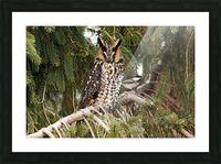 Brave Chickadee Picture Frame print