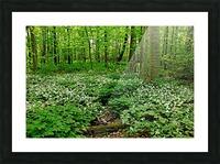 Trillium Woods VI Picture Frame print