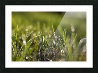 Dew Drops Picture Frame print