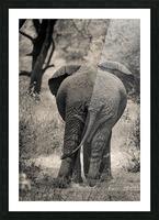 Straight Ahead - Droit Devant Picture Frame print