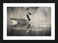 Canada Goose - 2 Picture Frame print
