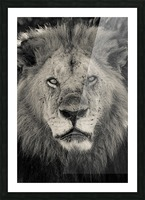 The King of South Africa - 2 Picture Frame print