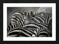 Between the Lines Picture Frame print