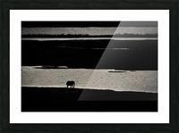 Chobe River Elephant Picture Frame print
