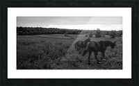 Horses in the Field Impression et Cadre photo