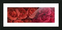 Lovely red flowers Picture Frame print