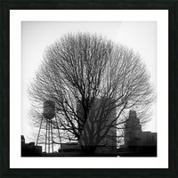 City Tree Picture Frame print