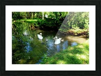 swan 6 Picture Frame print