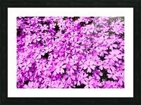 Pink Petals Picture Frame print