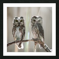 The Odd Couple - color Picture Frame print