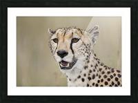 Cheetah Portrait by www.jadupontphoto.com Picture Frame print