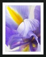 Inner Iris Picture Frame print
