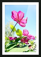 Pink flower and green leaves Picture Frame print