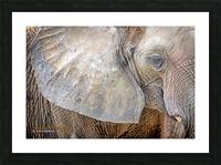 Elephant - APC-186 Picture Frame print