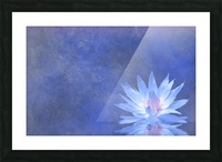 Lotus Blossom Picture Frame print