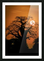 Baobab Sunset Picture Frame print
