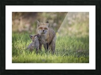 _T8C7860 Picture Frame print
