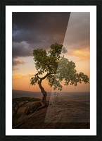 Tree of Life Picture Frame print
