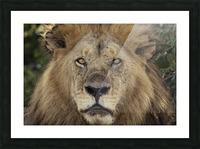 A Kings Portrait - color Picture Frame print