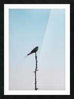 European Swallow Picture Frame print