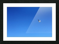 In Flight Picture Frame print
