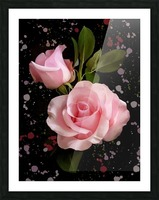 Pink Roses Picture Frame print