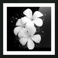 White Petunias  Picture Frame print