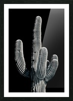 Saguaro 3 Picture Frame print