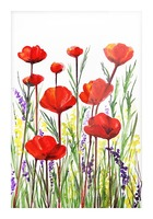 Red Poppies And Lavender Field Watercolor Picture Frame print