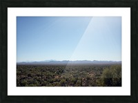 Saguaro Golden Hours 4 Picture Frame print