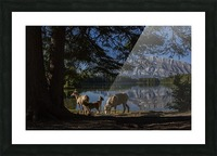 Lakeside  Picture Frame print