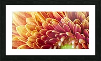 Golden Chrysanthemum Picture Frame print