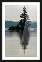 Lonely Tree Picture Frame print