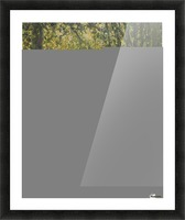 Trimed Trees Picture Frame print