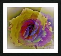 rose Picture Frame print