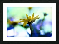 yellow flower Picture Frame print