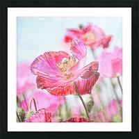 WILD POPPYS Picture Frame print