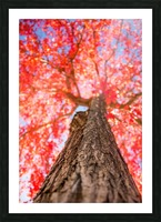 THE RED TREE Picture Frame print