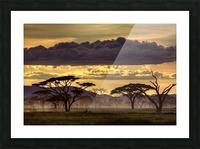 Good evening tanazania Picture Frame print