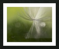 Shadows in the green Picture Frame print