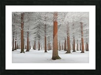 magical forest Picture Frame print