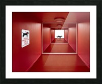 Dog on the Loose Picture Frame print