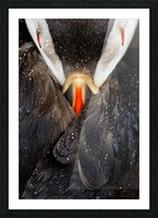 Puffin studio Picture Frame print