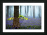 Spring........... Picture Frame print