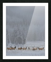 Standing in storm Picture Frame print