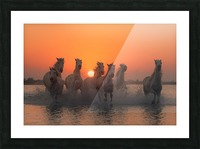 Sunset in Camargue Picture Frame print
