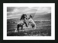 Wild and free Picture Frame print