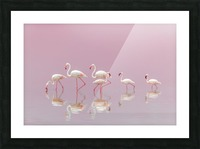 Flamingos Picture Frame print